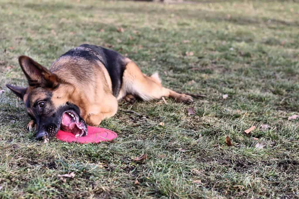 dog getting dirty on ground