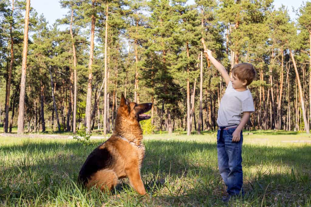 GSD and boy