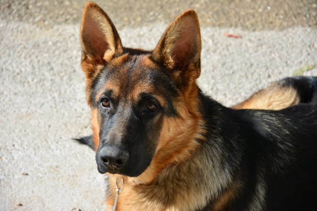 GSD looking straight