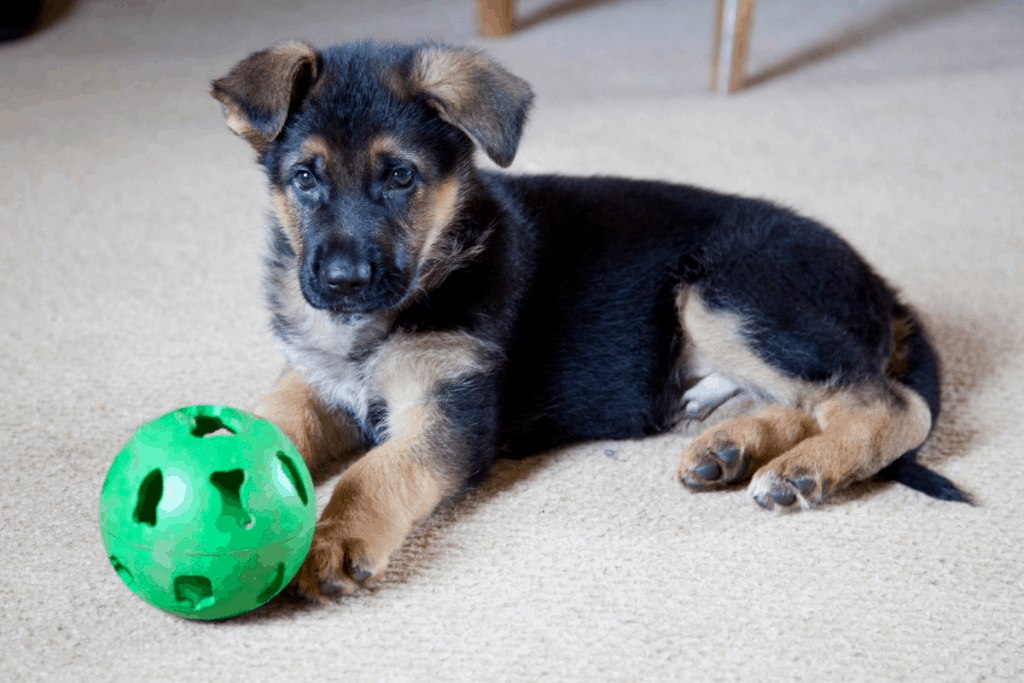 Are German Shepherds Good With Small Dogs? Tips & Tricks ...