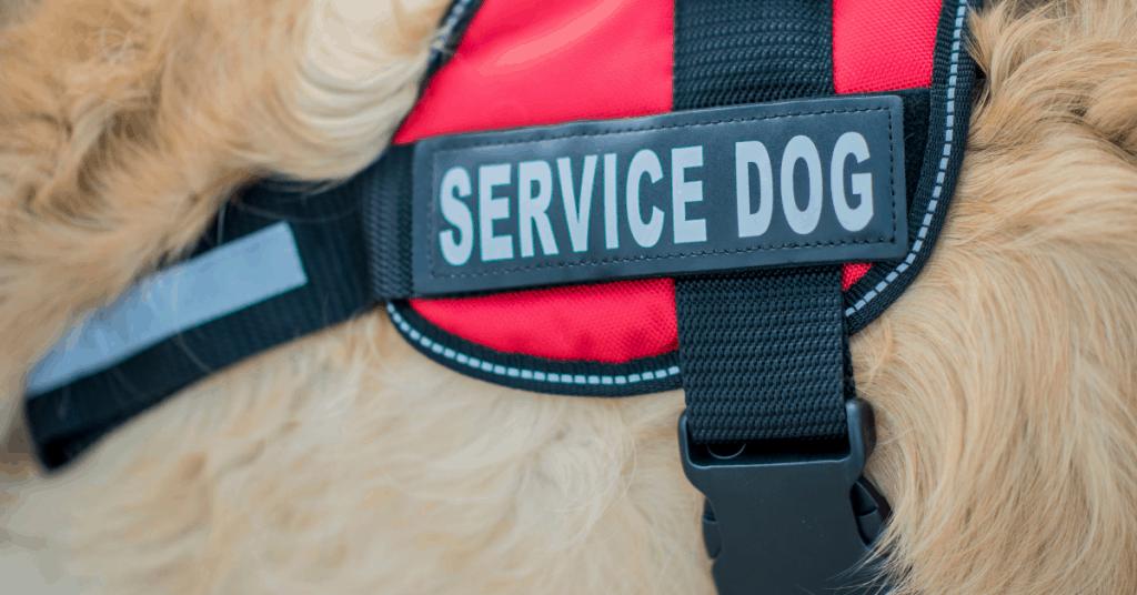 service dog vest on dog