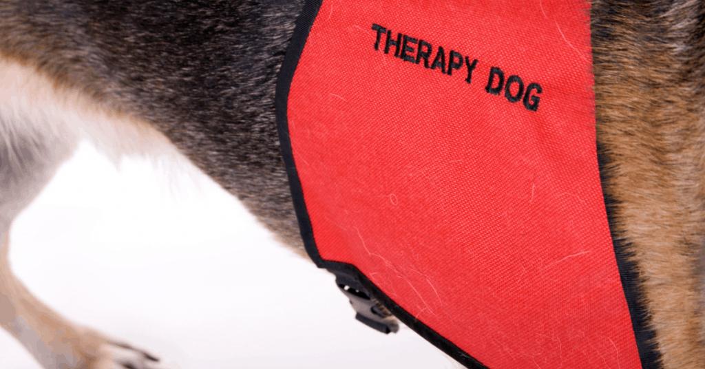 therapy dog vest on dog