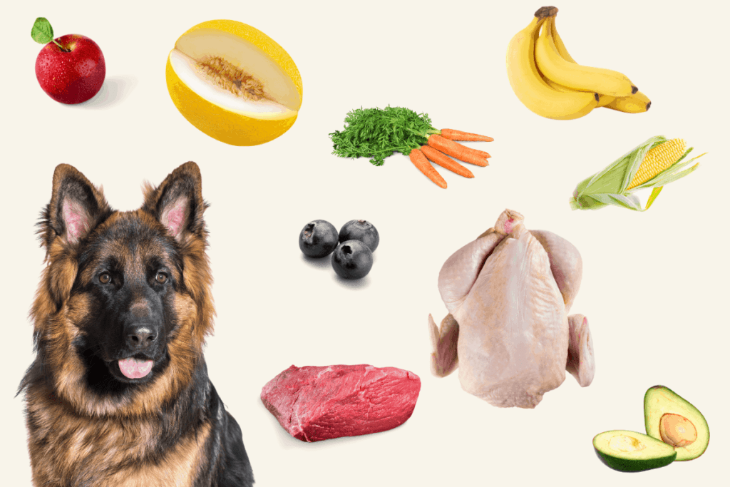 german shepherd surrounded by food