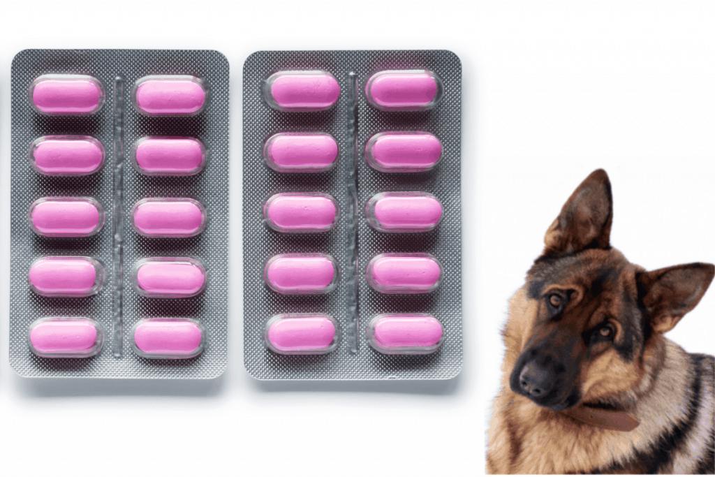 German Shepherd with Benadryl tablets in blister pack