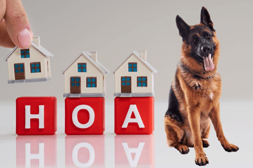 German Shepherd and homeowner's insurance concept