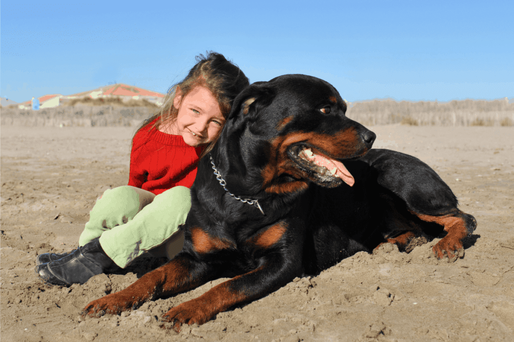 Rottweiler and child