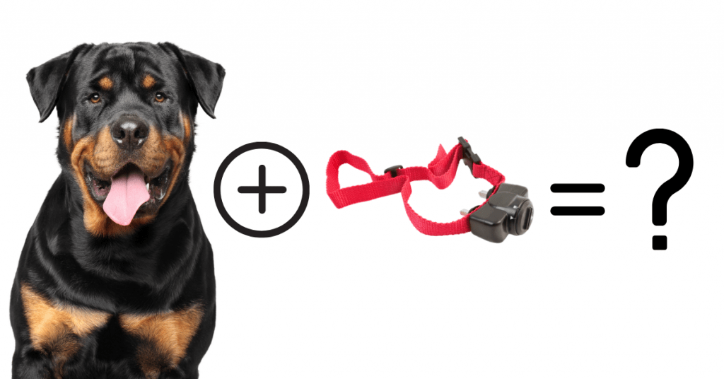 Rottweiler with shock collar concept
