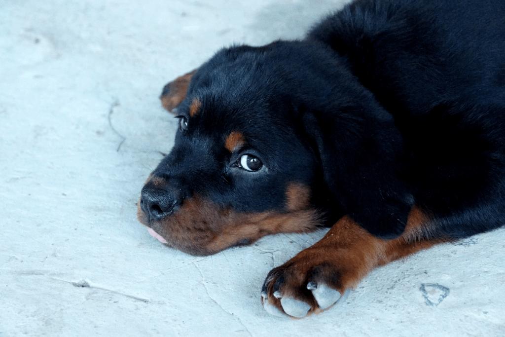 puppy on floor