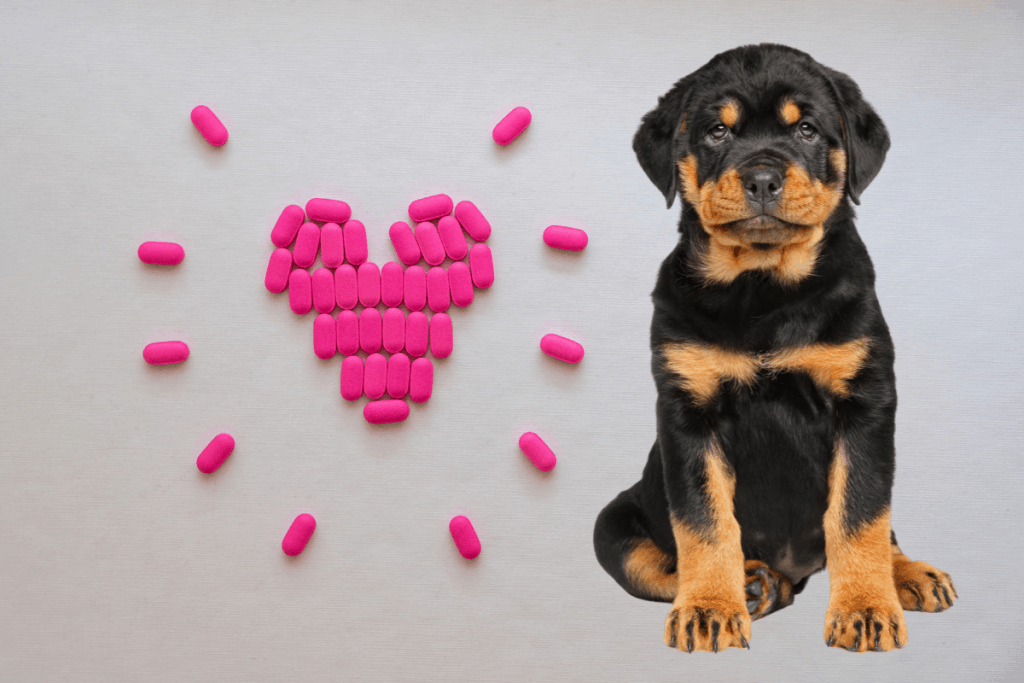 Rottweiler puppy and heart concept made of pink pills