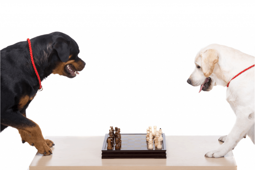 Labrador and Rottweiler playing chess
