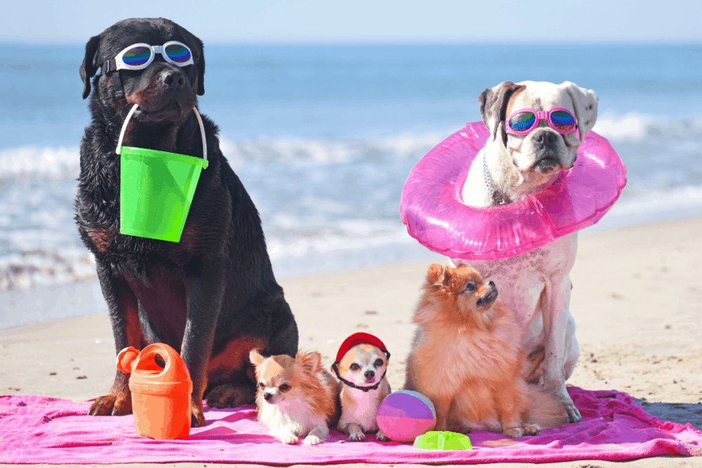 Rottweiler hanging out with other dogs in costume on beach