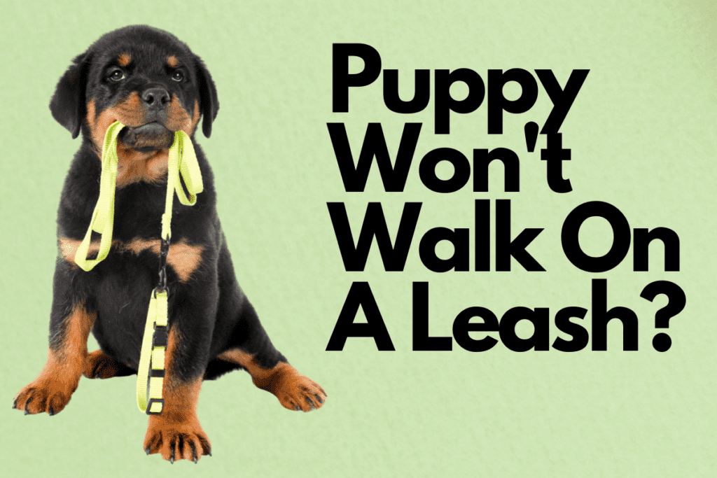 pup holding leash